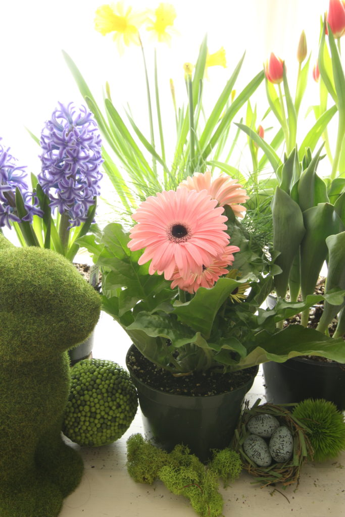 Gerbera Daisies Container Garden Spring Easter Planter Flowers