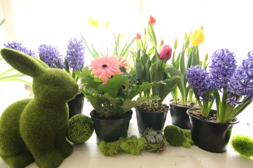 gerbera_daisies_container_garden_spring_easter_planter_flowers_white_moss_rabbits_nest