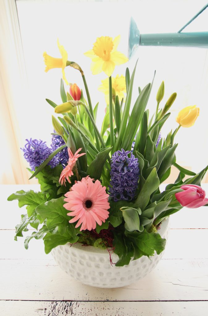 gerbera_daisies_container_garden_spring_easter_planter_flowers_white_moss_rabbits_watering_can